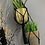 Thumbnail: Macrame Plant Holder Black