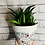 Thumbnail: Abstract Girl Plant Pot