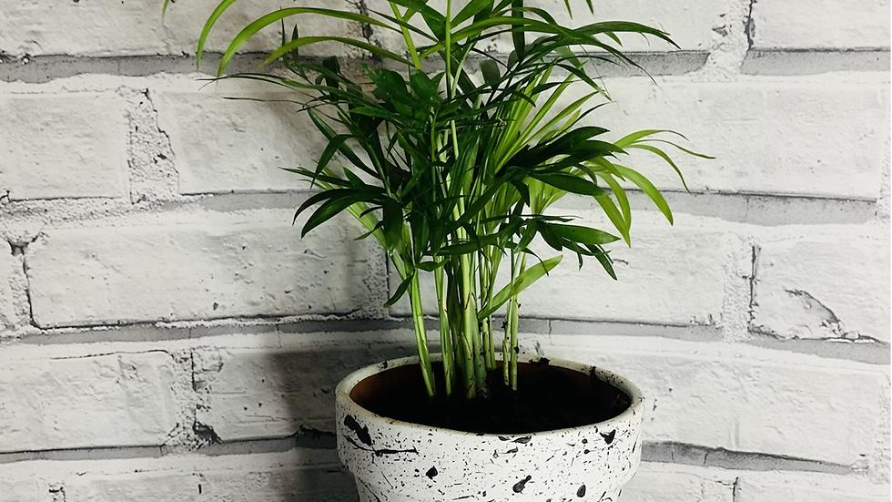 Black & White Speckled Pot