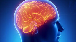 cerebro-20121116-original3.jpeg