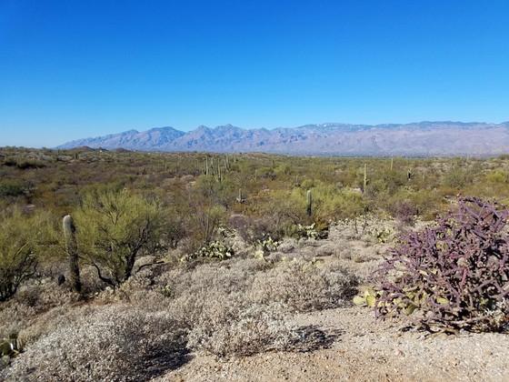 #11 Saguaro East National Park, AZ