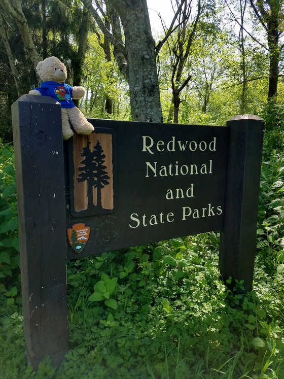 #28 Redwoods National Park        (and State Park)