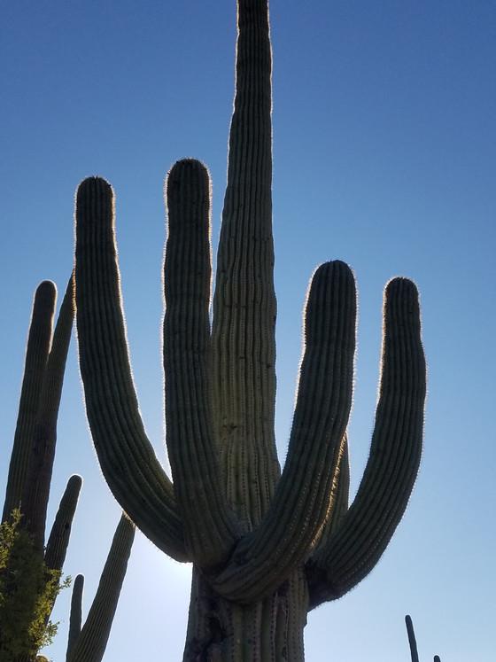 #10 Saguaro West National Park, AZ