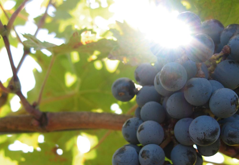 Atlas Hosts Wine-Pairing Dinner with Brancatelli