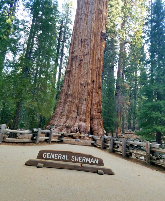 #25 Sequoia National Park, CA  Halfway done!