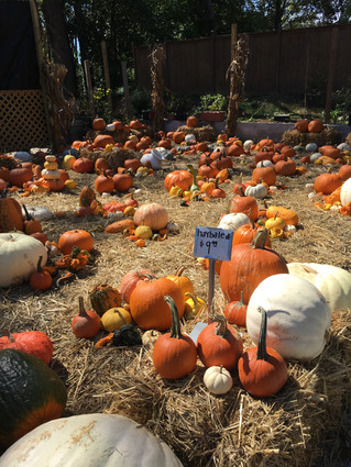 Pumpkin Patch at the Fall Festival on Ponce This Weekend