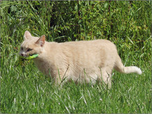 Een van de campingkatten, met een hagedis