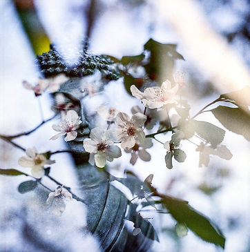 Frühlingsblüten_buddha-1320752_960_720.j