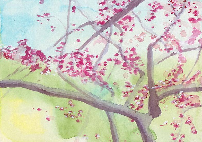 Yaedake Cherry Blossoms