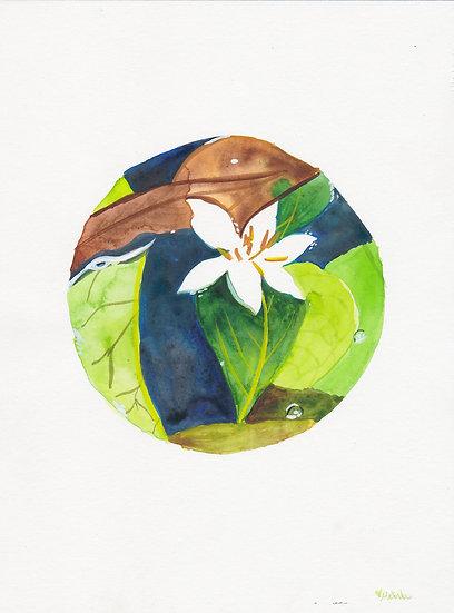 Fukugawa Flower