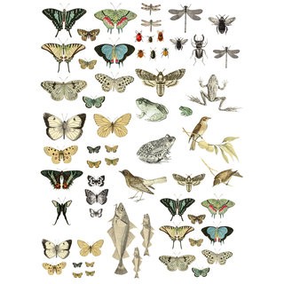 "IOD Transfer ""Entomology Etcetera"""