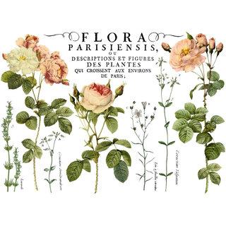 "IOD Transfer ""Flora Parisiensis"""