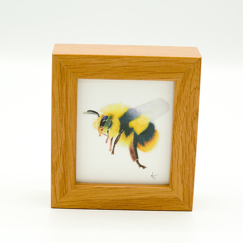 Flight of the Bumblebee mini box frame