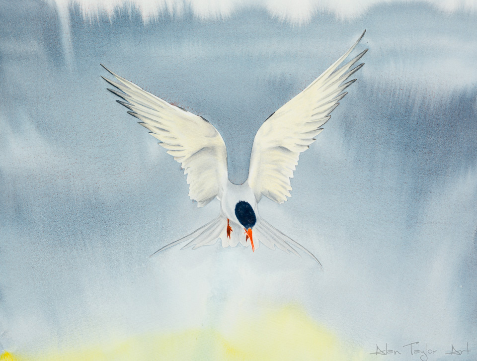 """""After the Storm"" - Arctic Tern watercolour painting by Alan Taylor Art"