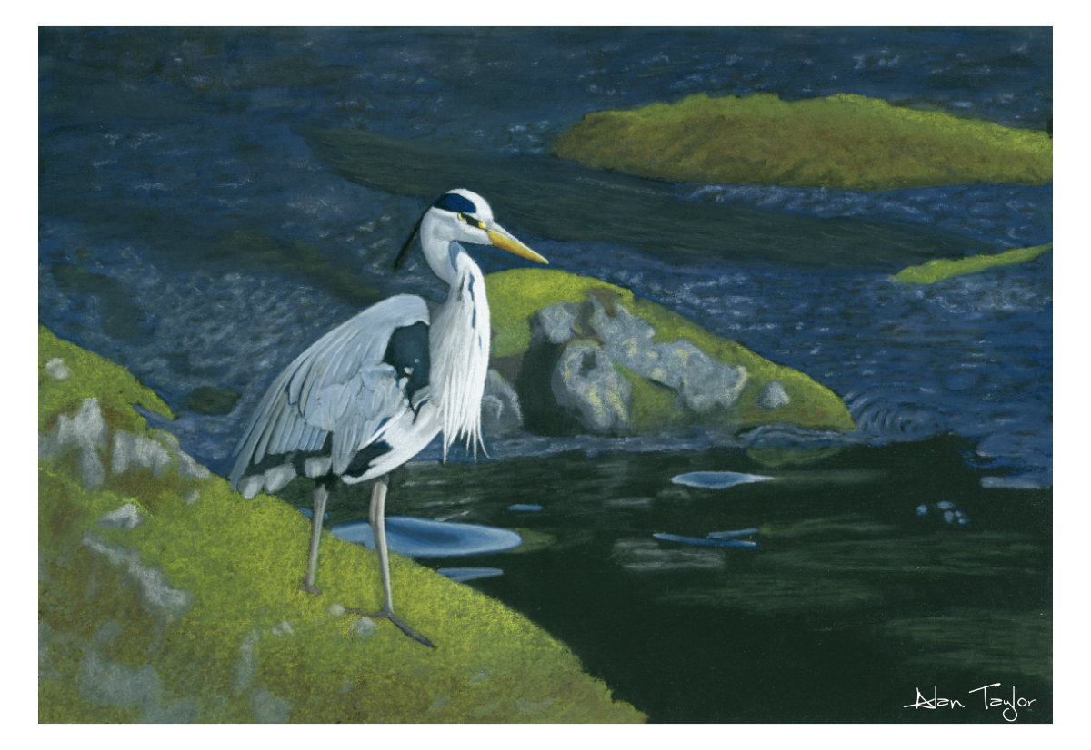 """Tranquillity"" Heron pastel painting by Alan Taylor Art"