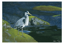 """""""Tranquillity"""" Heron pastel painting by Alan Taylor Art"""