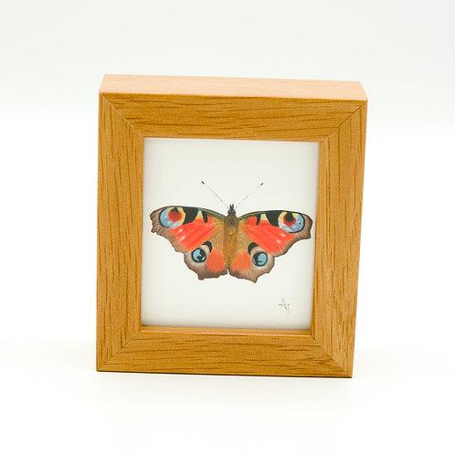 Peacock Butterfly Miniature Box Framed Art