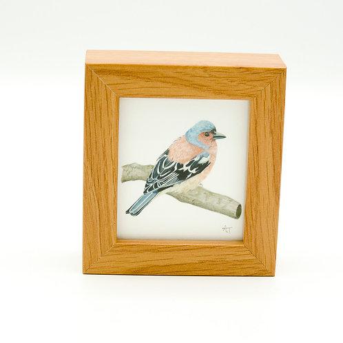 Chaffinch Miniature Box Framed Art
