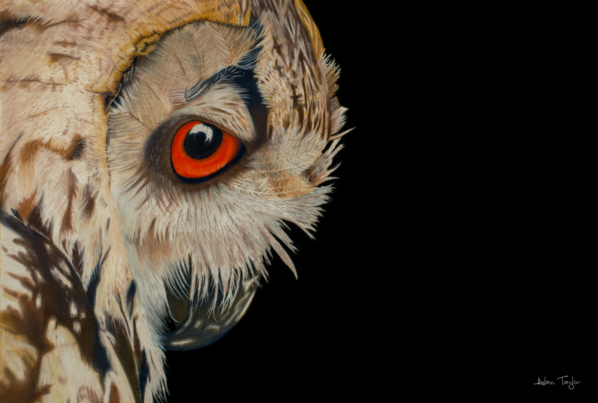 """Bubo bubo"" Eagle Owl pastel painting by Alan Taylor Art"