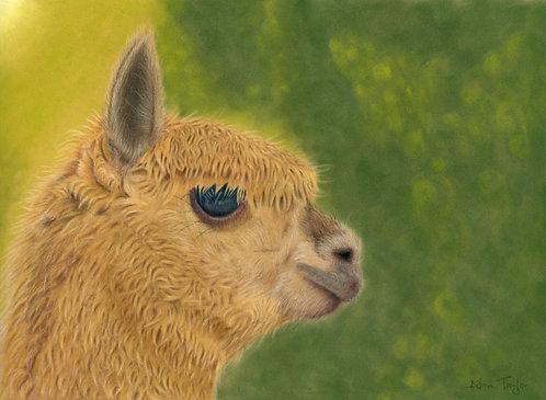 """Lady Gaia"" - Alpaca. Giclée fine art print edition."