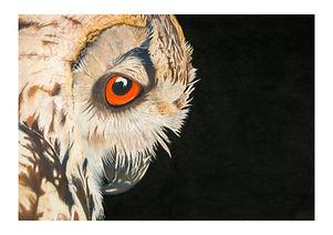 owl-a5-single-giclee.jpg