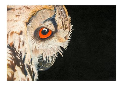 """Bubo Bubo"" - Eagle Owl Giclée fine art print edition."
