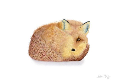 """""""Renard"""" the forever alert fox. Giclée fine art print edition."""
