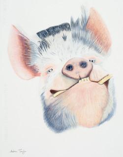 """Happy as....."" Kunekune Pig colour pencil drawing by Alan Taylor Art"