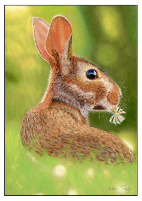 """Kit"" - baby rabbit. 5 Greeting Cards A6 when folded, with envelopes."
