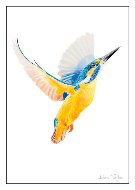 """""""Flight of the Kingfisher"""" 5 Greeting Cards A6 when folded, with envelopes."""