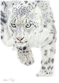 s-leopard-A4-giclee-web.jpg