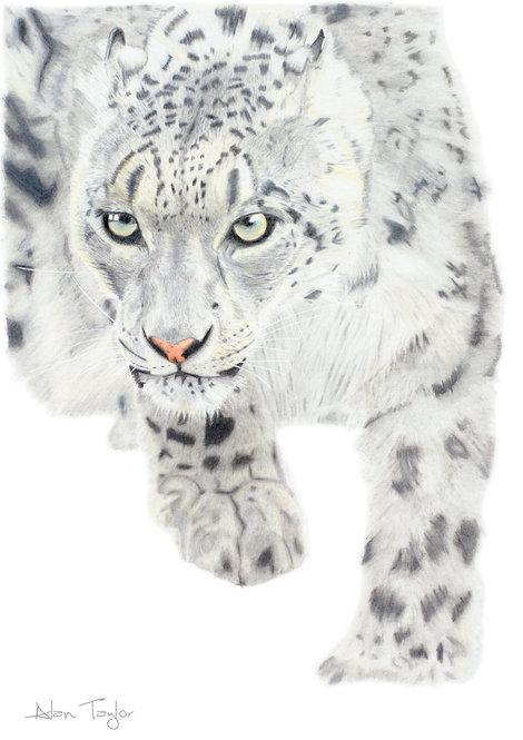 Snow Leopard Giclée Print