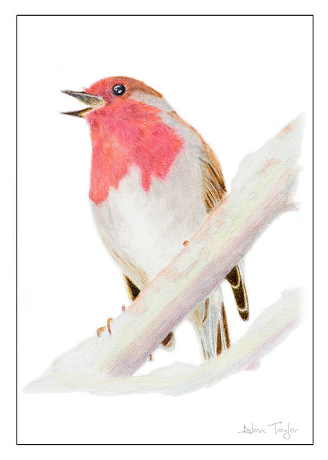 """Robin"" 5 Greeting Cards A6 when folded, with envelopes."