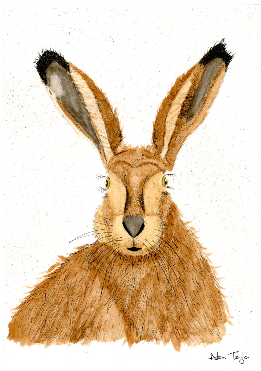 Hare ink and watercolour painting by Alan Taylor Art