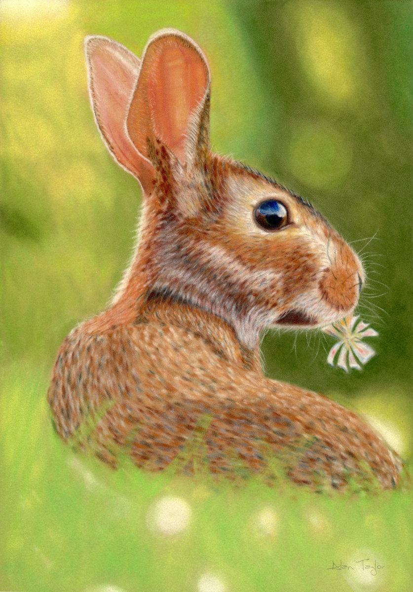 """Kit"" - Baby Rabbit pastel painting by Alan Taylor Art"