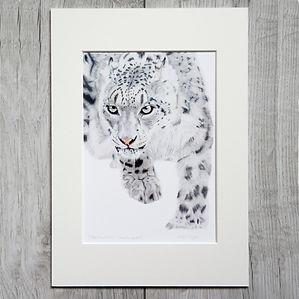 snow-leopard-giclee-print-alan-taylor-ar