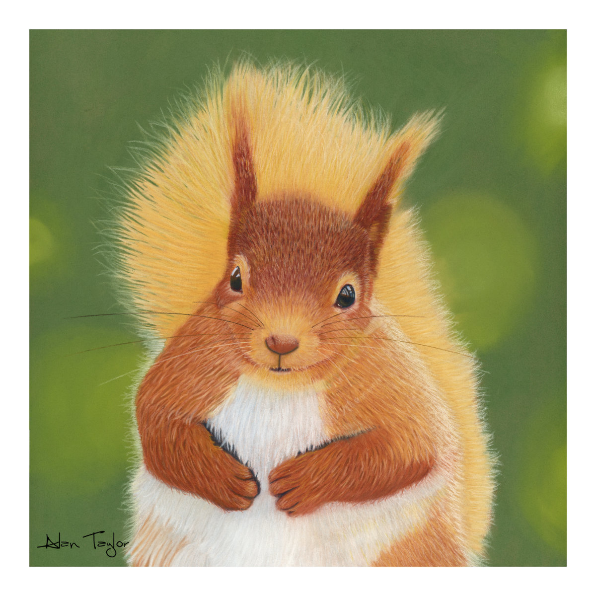 """Peanut"" Red Squirrel pastel painting by Alan Taylor Art"