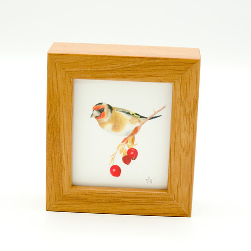 Goldfinch Miniature Box Framed Art