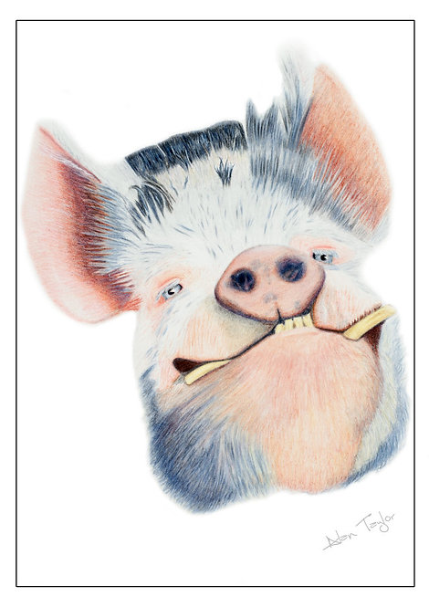 """Happy as ...""  Kunekune Pig. 5 Greeting Cards A6 when folded, with envelopes."