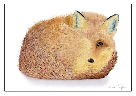 """""""Renard"""" the forever alert fox. 5 Greeting Cards A6 when folded, with envelopes."""