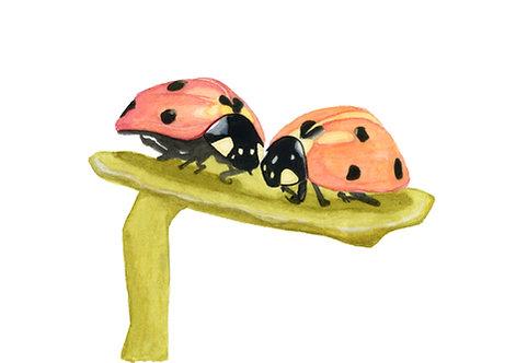 Lovebugs - Ladybirds Giclée Print