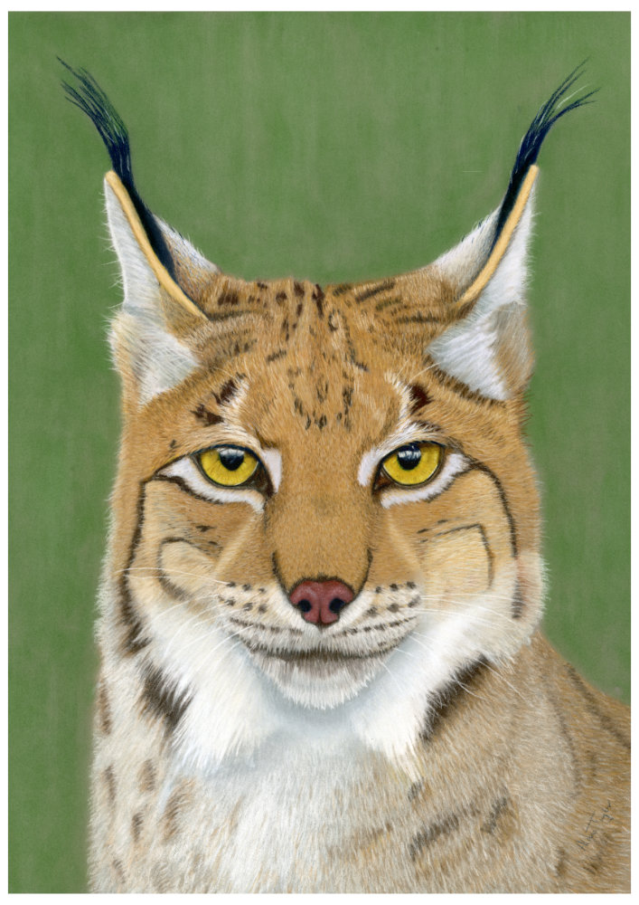 """Keeper of Secrets"" - Eurasian Lynx pastel painting by Alan Taylor Art"