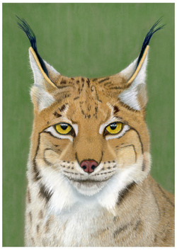 """Keeper of Secrets"" - Eurasian Lynx pastel painting by Alan Taylor Art"