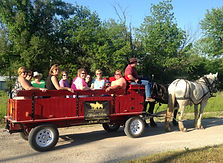 wine_country_horse_drawn_wagon_girls_day