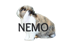 nemo1_edited.png
