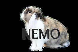 nemo1_edited.png