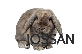 jossan_edited.png