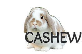 cashew1_edited.png
