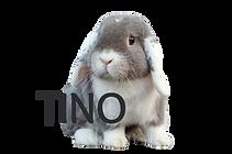 tino_edited.png