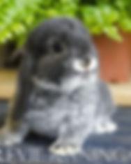 vulpia.jpg
